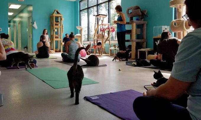 yoga-chats