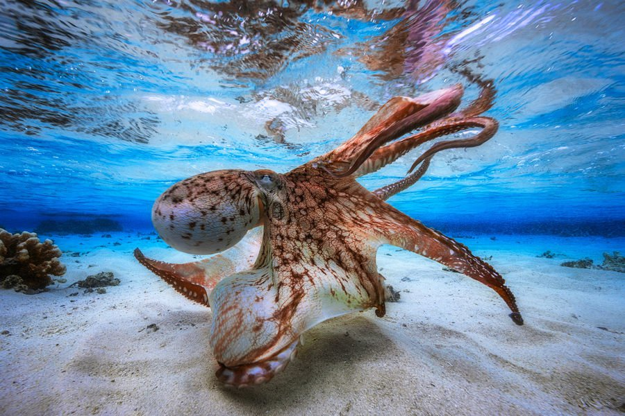 Plongez dans le mystère des fonds marins