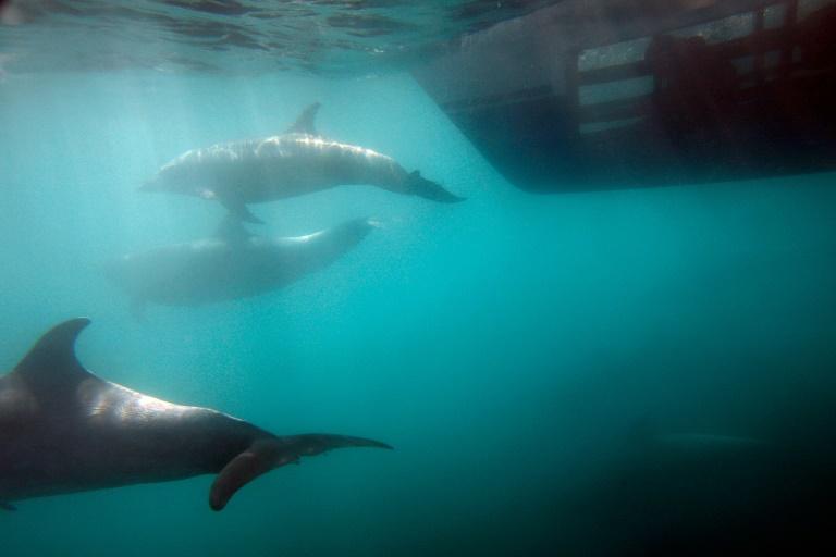 Les dauphins faisaient partie des nombreuses espèces d'animaux que la CIA a tenté d'entraîner pour des missions d'espionnage à l'époque de la Guerre froide