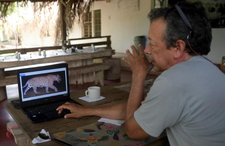Le fermier colombien Jorge Barragan montre la photo d'un jaguar prise par un appareil automatique à la réserve naturel de La Aurora, dans la municipalité de Hato Corozal, Colombie, le 9 avril 2021