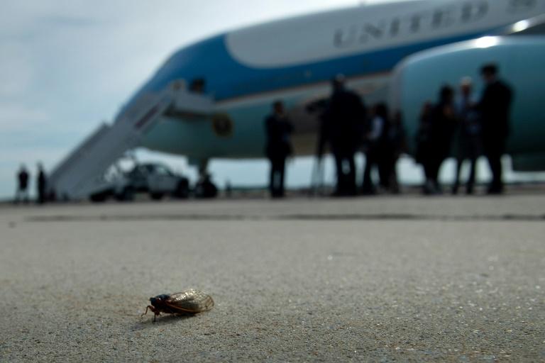 Une cigale sur le tarmac près d'Air Force One sur la base d'Andrews dans le Maryland le 9 juin 2021, avant le départ du président Biden pour l'Europe