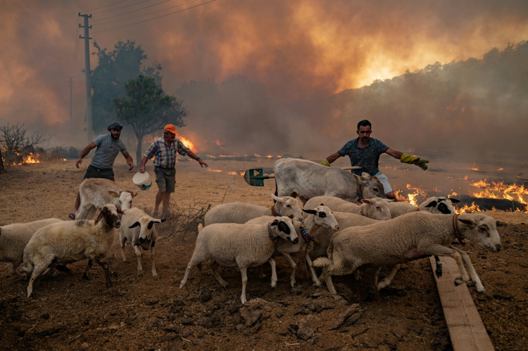 Des hommes rassemblent des moutons pour les éloigner d'un incendie qui progresse, le 2 août 2021 à Mugla, dans le district de Marmaris en Turquie