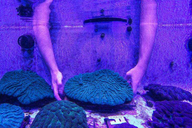Au Centre de sauvetage des coraux de Floride à Orlando le 20 septembre 2021