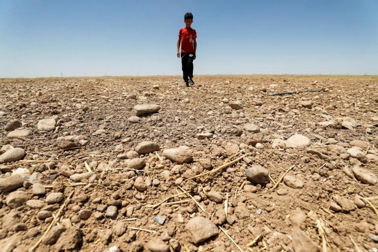 Un champ desséché dans la région de Saadiya, au nord de Diyala, en Irak le 24 juin 2021
